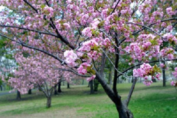 Picture of Cherry Tree Mobile Home Park, Lincolnshire