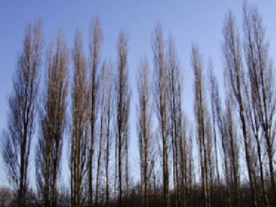 Picture of Poplars Park, Gloucestershire