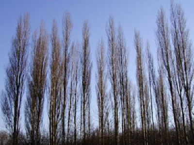 Picture of Silver Poplars Park, Staffordshire