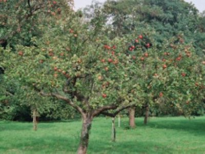 Picture of The Orchard, Hampshire