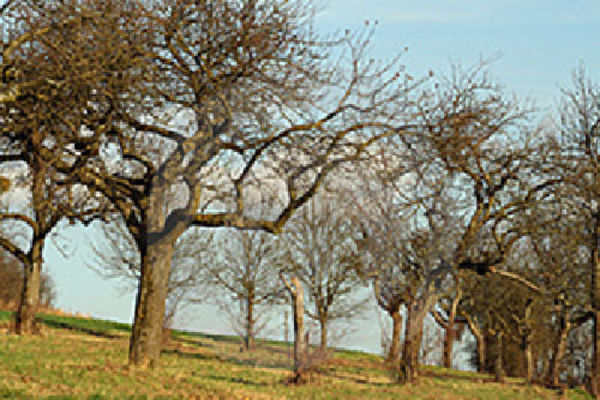 Picture of The Orchards, Gloucestershire