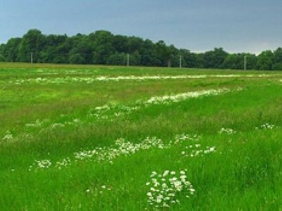Picture of Wickens Meadow, Kent